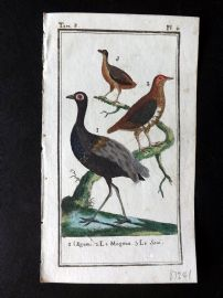 Buffon 1785 Antque Hand Colored Bird Print. Grey-Winged Trumpeter etc 8-4